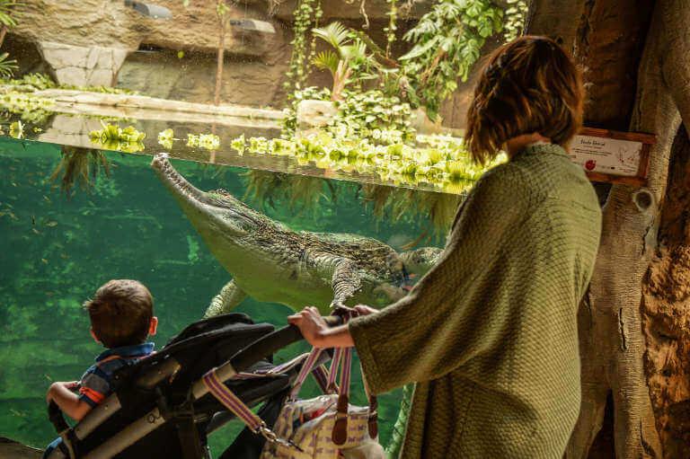 frankie_the_sunda_gharial_crocodile
